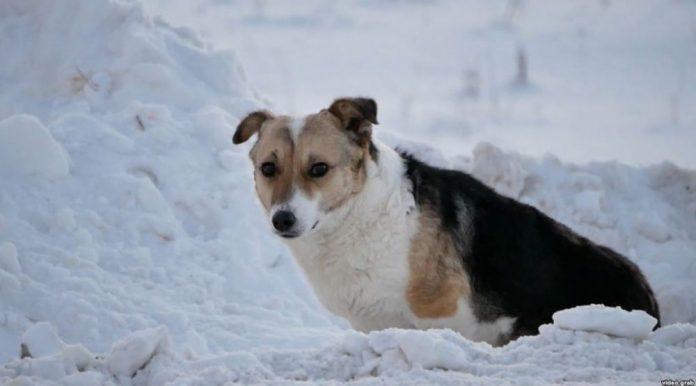 Pas mjesecima na istom mjestu čekao vlasnika da se vrati po njega
