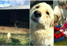 Neutješna majka je u požaru izgubila svoje psiće, mjesec dana kasnije dobila je iznenađenje
