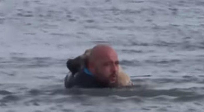 Uletio je u ledeno jezero i golim rukama razbijao led kako bi spasio zarobljenog psa