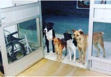 DIRLJIVI PRIZOR: Beskućnika ispred bolnice čekali psi lutalice o kojima se brinuo