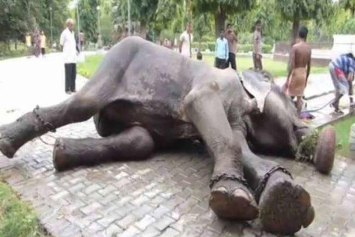 Slon zaplakao kada je pušten iz zatočeništva u kojem je bio 50 godina