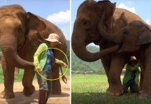 slonovi pametne životinje