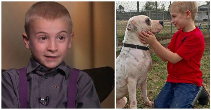7-godišnjak spasio više od 1.300 pasa iz skloništa