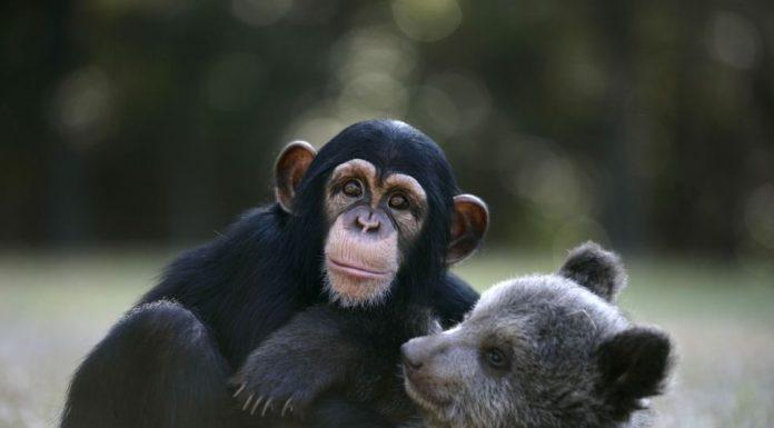 Životinje neočekivani prijatelji