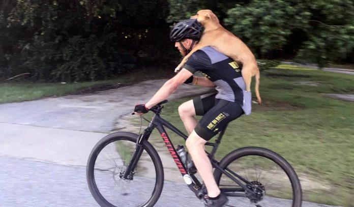 Biciklist je ugledao psa lutalicu 10 kilometara izvan grada, nije ga mogao ostaviti