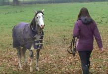 Djevojka se bojala da je konj neće prepoznati