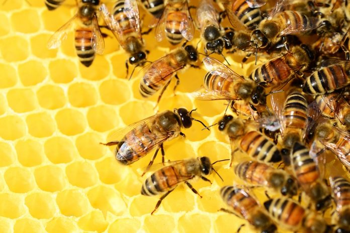 Pčele masovno izumiru