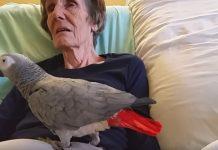 Papiga i njezina vlasnica na samrti se opraštaju nakon 25 godina