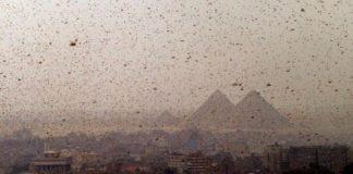 skakavci u Egiptu