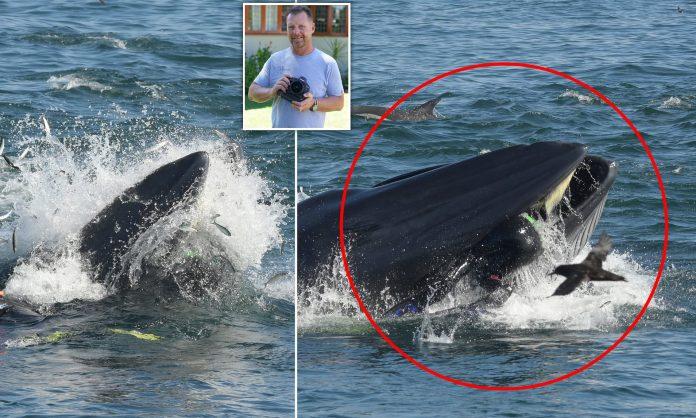 čovjeka progutao ispljunuo kit