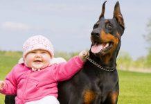 Djeca mlađa od deset godina su najviše izložena riziku od ugriza pasa