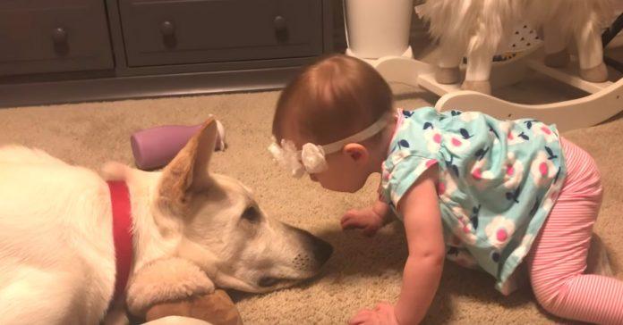 Djevojčica počela ljubiti psa