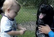 Pas spasio dječaka od dadilje koja je imala loše namjere