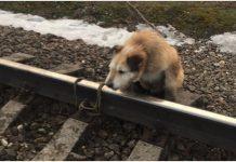 Psa vezali za prugu kako bi ga zgazio vlak