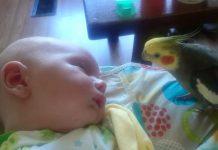 Dok je beba tonula u san, papiga je radila nešto čudesno