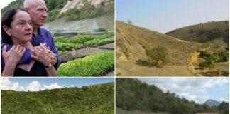 Bračni par zasadio 4 milijuna stabala