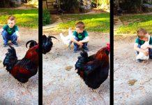 Dječak je ispružio ruke prema kokoši, a ono što je uslijedilo je uistinu predivno
