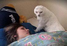 Mačak bez ušiju je pronašao način kako da zahvali svojoj vlasnici koja ga je spasila