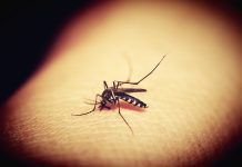 Europom će harati tropske bolesti, a među najviše ugroženima je i Hrvatska