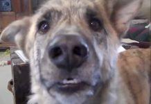 Ovaj pričljivi pas je prava senzacija