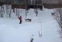 Ženu napao čopor pasa