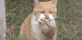 Mačka odbijala hranu