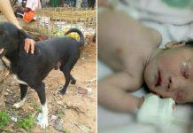 Herojski pas je spasio živu zakopanu novorođenu bebu