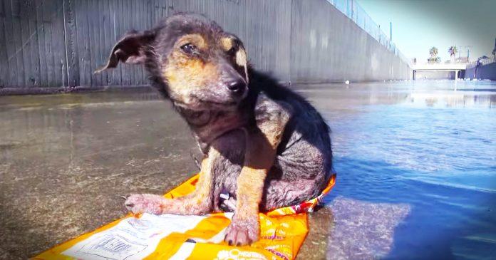 Pas se čudesno oporavio nakon što mu je muškarac odrezao nogu i bacio ga u rijeku