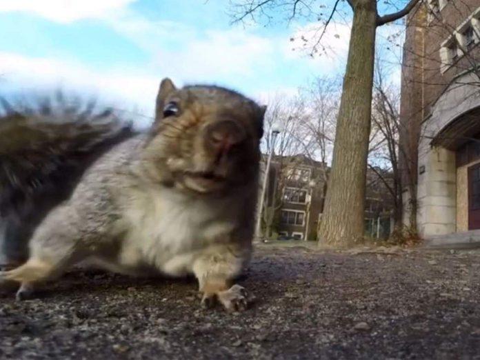 Vjeverica se približila njegovoj kameri