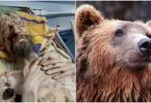 Čovjek spašen iz medvjeđeg brloga gdje se nalazio čak mjesec dana