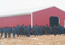 250 složnih Amiša je svojim rukama prebacilo staju na drugo mjesto