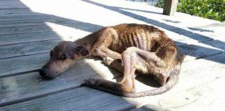 Fotograf pronašao izgladnjelog psa na osamljenom otoku