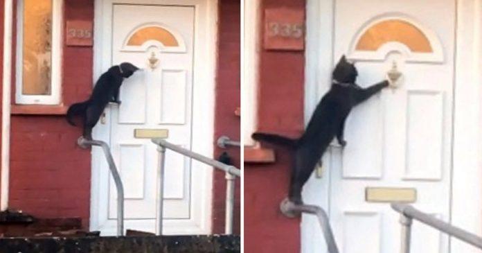 Mačka kuca na ulaznim vratima