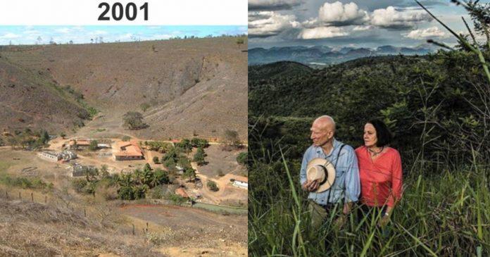 Par je posadio drveće u pustoši - 20 godina kasnije, rezultat oduzima dah