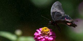Izumiranje kukaca šokiralo znanstveni svijet