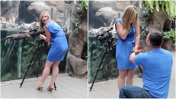 Budući muž joj je priredio nevjerojatno iznenađenje u koje je uključio životinje
