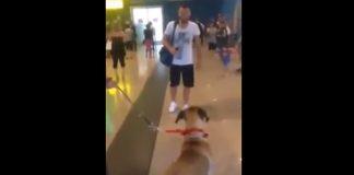 Pas nije vidio vlasnika 3 godine