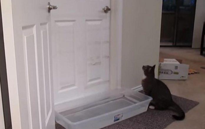 Svima je već poznato da mačke često okrenu situaciju u svoju korist,