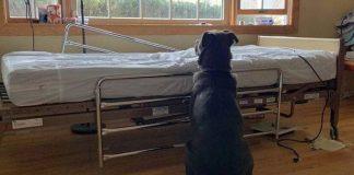 labrador čeka vlasnika koji je preminuo