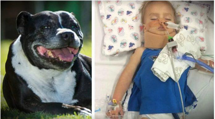 Obiteljski pas je u vodi pronašao dječaka (2) bez svijesti