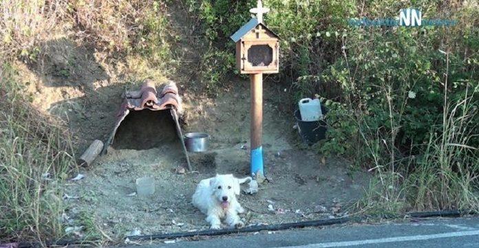 Pas 18 mjeseci boravi na mjestu na kojemu je poginuo njegov vlasnik