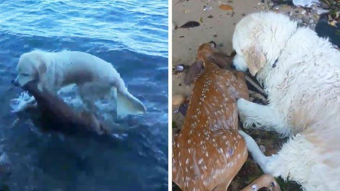 Pas je skočio u vodu, vlasnik se zadivio kada je vidio zašto