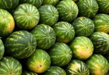 savjeti odabir savršene lubenice