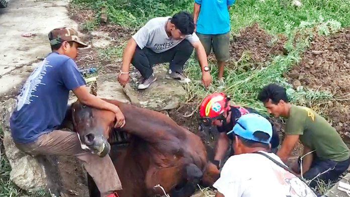 Slijepi konj je upao u rupu
