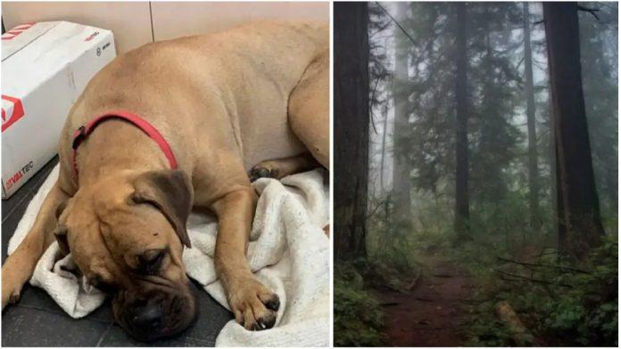 Pas je hodao 200 kilometara do vlasnika koji su ga napustili