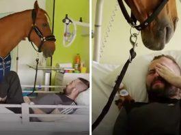 Ovaj konj donosi radost smrtno bolesnim pacijentima u bolnici