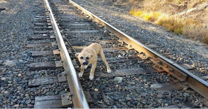 Psa su zavezali za prugu i ostavili da umre