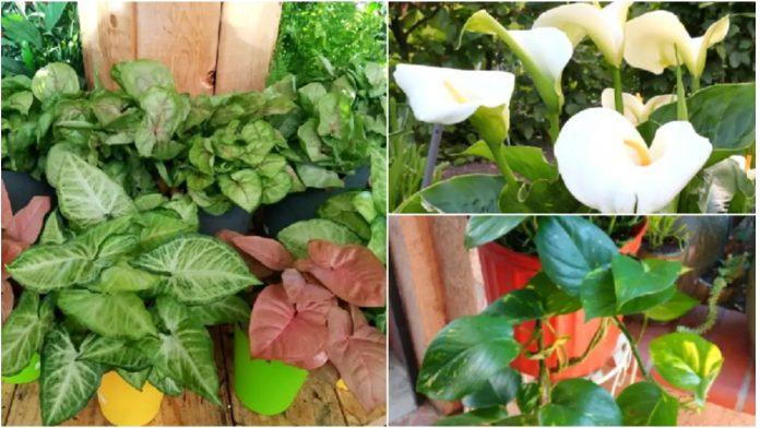 Kućne biljke otrovne za ljude i ljubimce