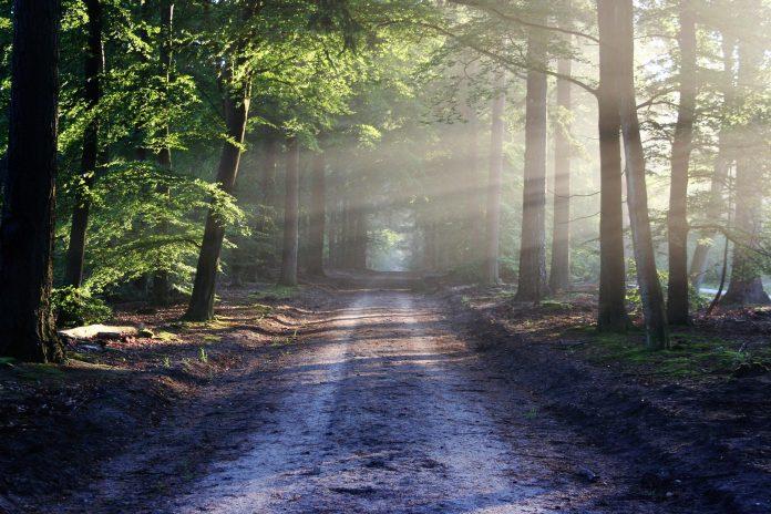 cesta prema raju