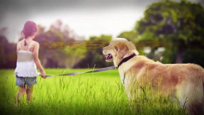 Šetala je sa svojim psom kada ju je nepoznati muškarac zgrabio za ruku